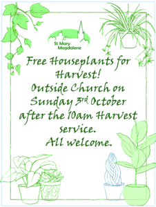 Free Houseplant Giveaway is Back